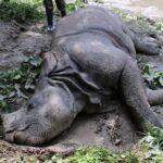death rhino