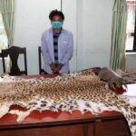 badh chhala tiger skin