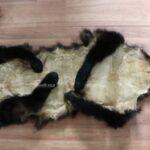 red pandako skin
