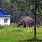 elephant jhapa